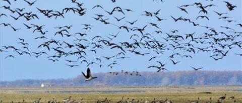 Hortobágyi helyi jelentőségű természetvédelmi terület kezelési terve